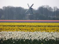 Windmill_5