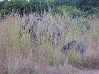 Baby_elephant2