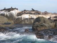 Seal_island