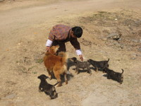 Punakha_puppies