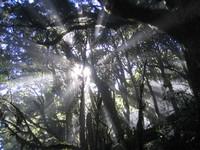 3_sun_trees