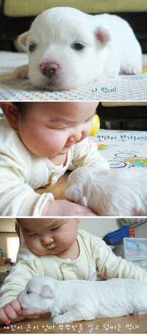 Babyanddog
