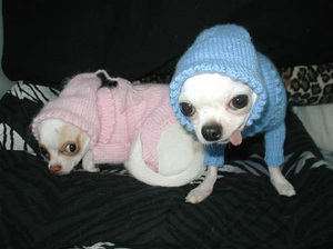Dogs_sweaters_1_1