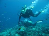 Reef_hooks1