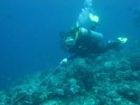Reef_hooks2