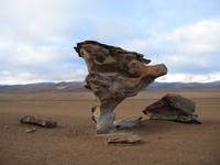 Stone_tree_1