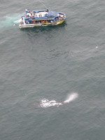 Whale_boat_1